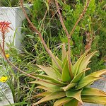 Cabot Pollensa Park Spa ภาพถ่าย