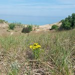 Indiana Dunes State Park Foto