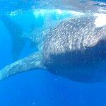 Encuentro con Tiburón Ballena