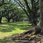 写真Oak Alley Plantation枚