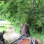 Ed's Buggy Rides의 사진