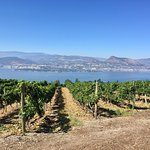 View at one of the wineries