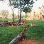 Биопарк Валенсия: львица