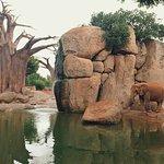 Биопарк Валенсия: слоны