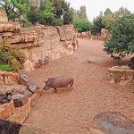 Биопарк Валенсия: носороги, зебры, страусы