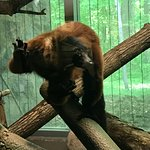 Milwaukee County Zoo Foto