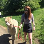 BobCat Alpacas Photo