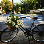 Our infamous vintage Schwinn bicycle sits outside every day, filled with seasonal flowers