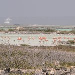 We never got close to the flamingos. There were thousands
