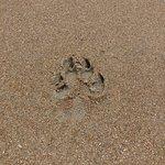 Foto de Topsail Island