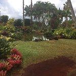 Pineapple Park - Volcano: side yard
