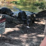 East Texas Gators and Wildlife Park Image