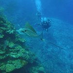 Dive Master Josue and a spotted eagle ray