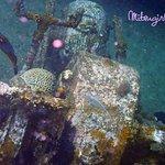 Snorkeling at the shipwreck