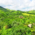 views of the jungle