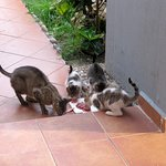 Cats are eating
