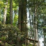 Mitsumine Shrine ภาพถ่าย