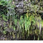 Fern Grotto, Wailua River, Kaua'i