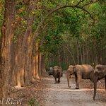 Elephant Dhikala Zone Jim Corbett