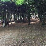โซฟิเอโร สล็อตต์ ภาพถ่าย