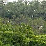 Breeding ground for a variety of birds