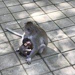 圣猴森林照片