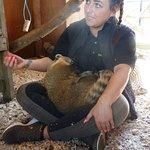 Cuddly coati