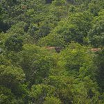 Anaiyirangal Dam - Elephants in the woods - Try spotting them