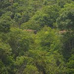 Anaiyirangal Dam - elephants in the woods - count them all