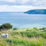 view from the path to robin hoods bay