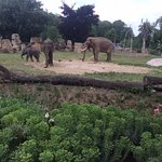 2 elephants were born in this zoo in 2016!