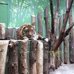 Gorgeous tiger!