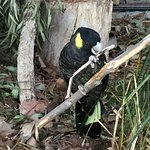 Trowunna Wildlife Sanctuary Photo