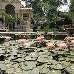 Garden of Dreams ภาพถ่าย