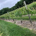 Vineyard from out front