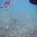 Photo de Reef Runner Glass Bottom Boat