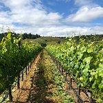 Photo de Ferrari-Carano Winery