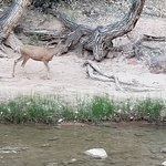 Zion Canyon Campground ภาพถ่าย