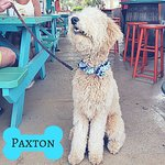 We have a pet friendly patio. Bring your furry friend!