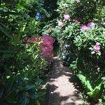 Pashley Manor Gardens Photo