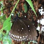 Butterfly World and Fountain World ภาพถ่าย