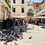 Birds in the piazza