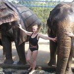 Elephant and human showers