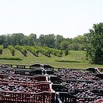 View of newly harvested grapes and South vines