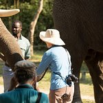 Guests have a chance to feed, walk with and get photos right next to elephants