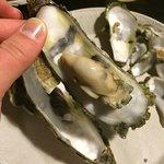 yum yum oysters!