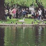 สวนสาธารณะบอสตัน ภาพถ่าย