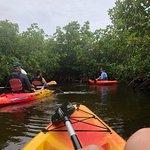 Kayaking through the mangrove