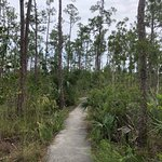 Everglades National Park照片
