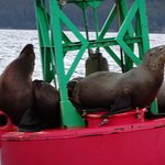 Some of the sea lions we saw..